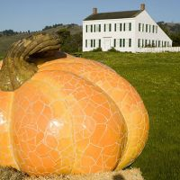 Mosaic pumpkin sculpture by Peter Hazel