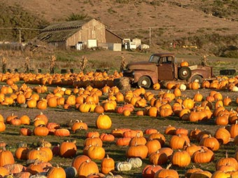 Half Moon Bay pumpkin field