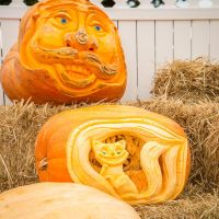 Farmer Mike's magnificent carved pumpkins